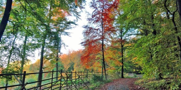 Wanderweg im Herbst