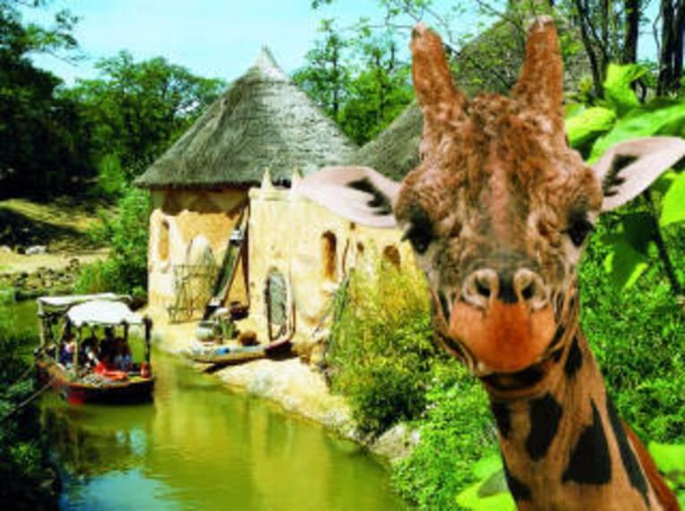 Giraffe am Sambesi Fluss