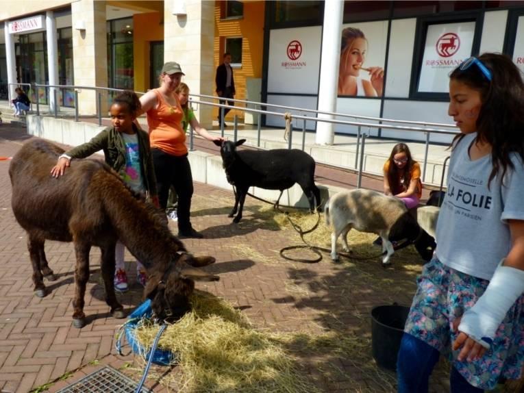 Auf dem Bild ist ein Esel und zwei Ziegen zu sehen. Kinder und Jugendliche streicheln diese Tiere.