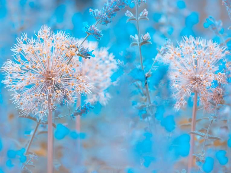 Gewinnerin The Beauty of Plants