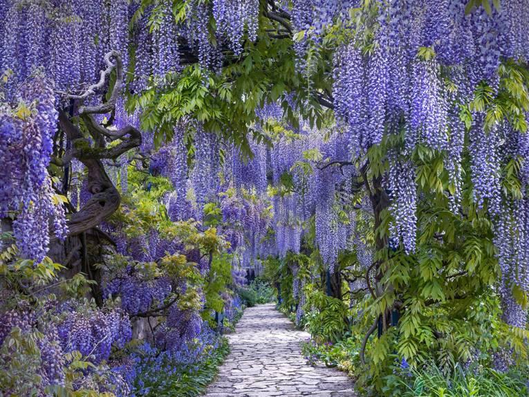Gewinner Beautiful Gardens