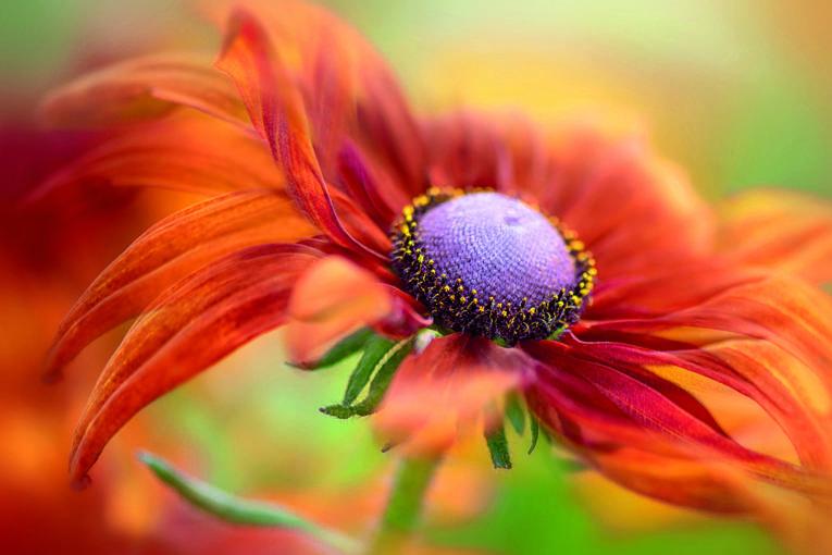 1. Platz The Beauty of Plants