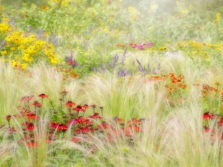 Gewinnerin Beautiful Gardens