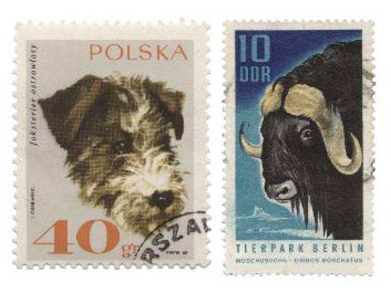 Zwei Tierbriefmarken. Auf der einen ist die Zeichnung eines Hundekopfs zu sehen, auf der anderen der Kopf eines Moschusochsen.