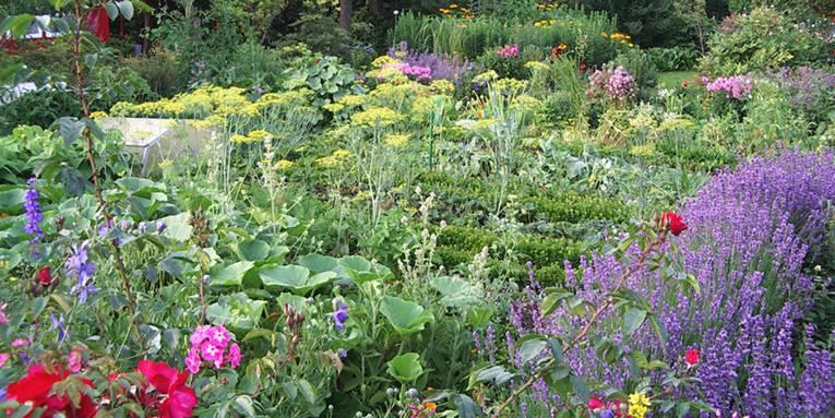 Blick in einen Kleingarten, der eine bunte Mischung aus blühenden Pflanzen (Rosen, Lavendel, Phlox, Dill und weiteren Stauden) beinhaltet.