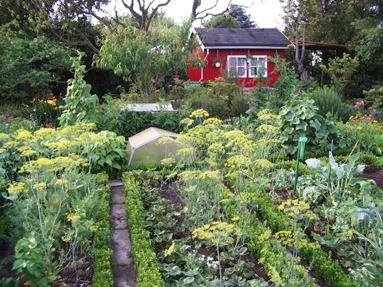 Gemüsebeet mit rotem Gartenhäuschen im Hintergrund