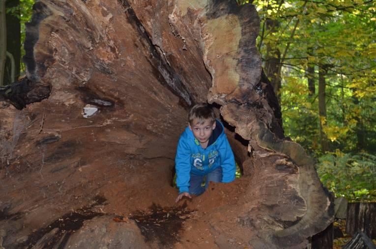 Ein Junge erkundet einen ausgehöhlten Baumstamm