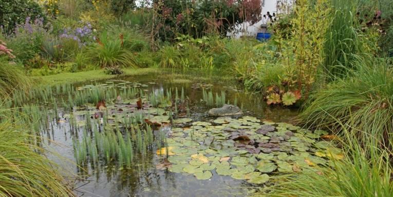 Kleingarten mit einem Teich.