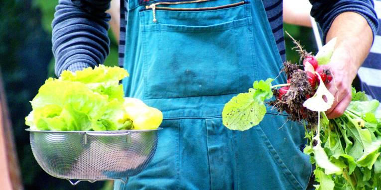 Salat und Radieschen in den Händen einer Person mit blauer Latzhose.