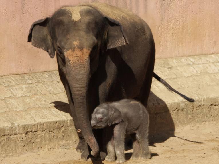 Ein kleiner Elefant mit einem großem Elefanten