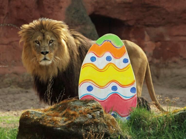Löwe hinter einem Osterei.