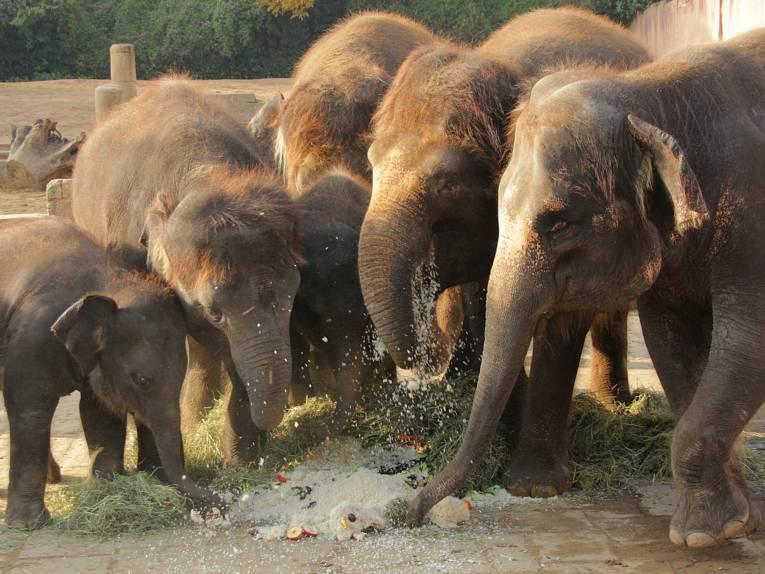Fünf Elefanten um eine Torte.