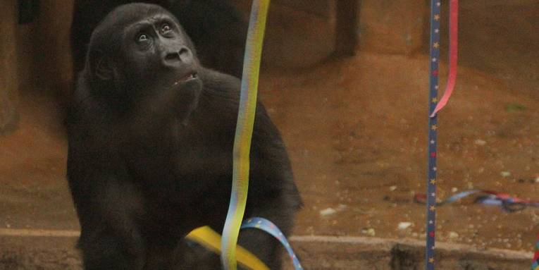 Gorilla mit Luftschlangen.