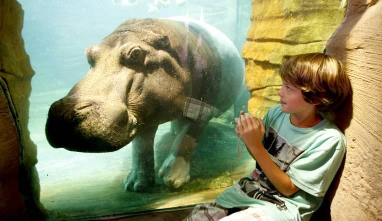 Eine Junge beobachtet ein Flusspferd