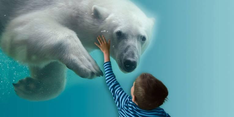 Ein kleiner Junge, der einen Eisbären im Unterwasserbecken beobachtet