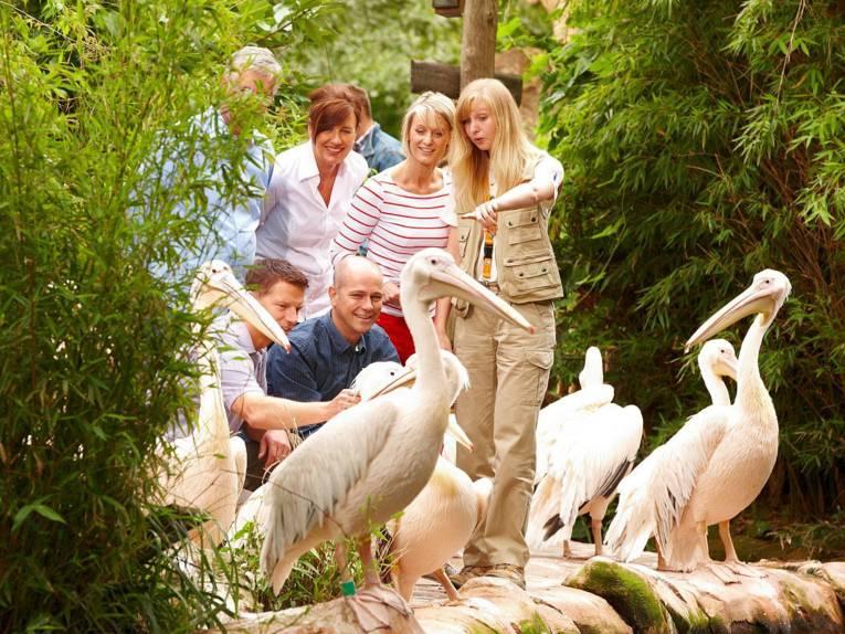 Menschen und Pelikane.