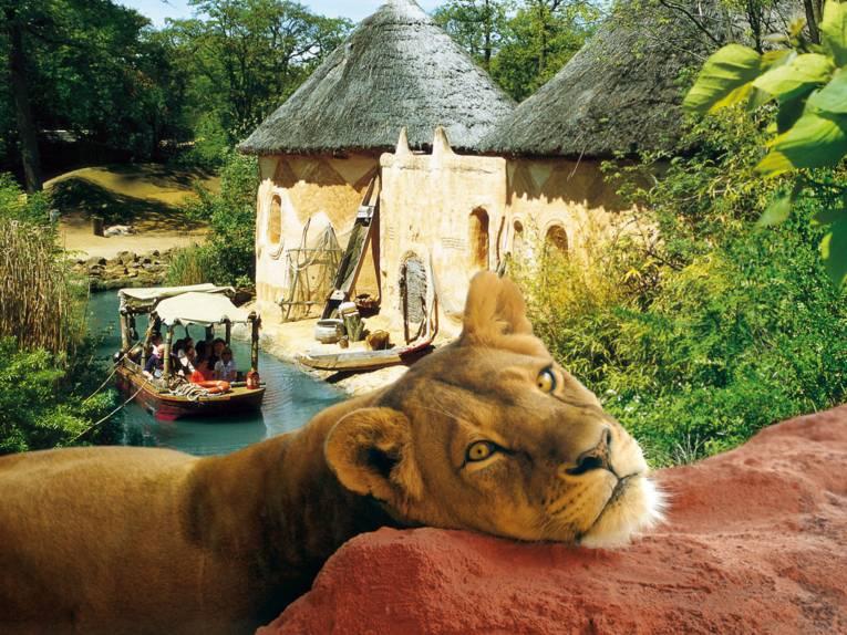 Fotomontage, Löwin vor Sambesi-Flusslandschaft