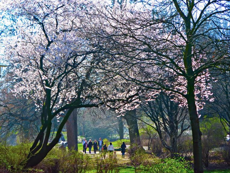 Spaziergänger unter blühenden Bäumen