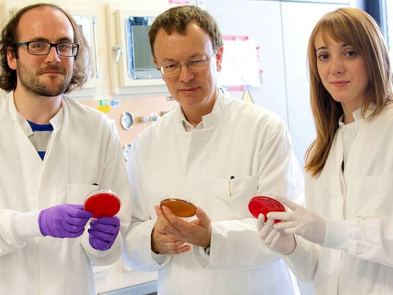 Zwei Männer und eine Frau in weißen Kitteln mit Petrischalen.