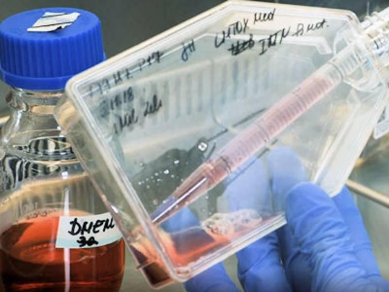 Hand in Schutzhandschuh hält Laborgeräte