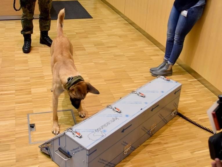 Ein Hund steht vor einem länglichen, silbergrauen Behälter.