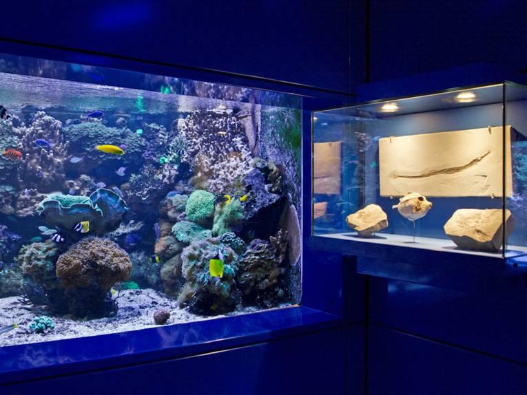 Aquarium und Vitrine
