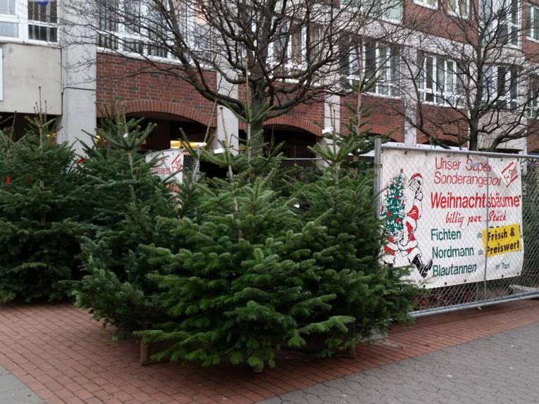 Tannen und andere Bäume an einem Weihnachtsbaumverkaufsstand.