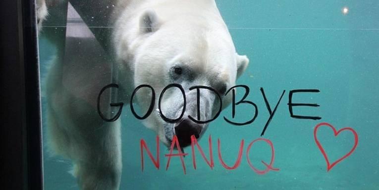 """Weißer Bär im Wasser hinter einer Glasscheibe mit dem Schriftzug """"Goodbye, Nanuq!"""""""