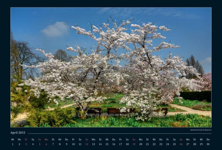 Ein japanischer Kirschbaum.