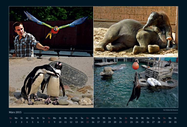 Vier Bilder, die Tiere im Erlebnis-Zoo zeigen.
