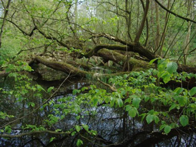 Urwald im Norden Hannovers
