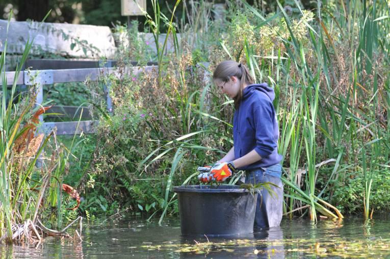 Arbeit im Teich