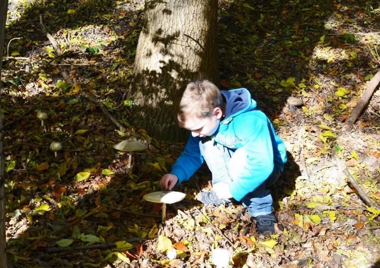 Kleiner Junge, einen Pilz untersuchend.