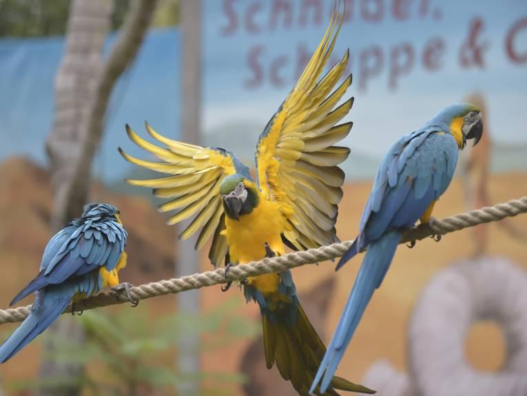 Tiere im Erlebnis-Zoo Hannover