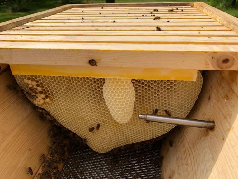 Kasten mit Wabe und Bienen.