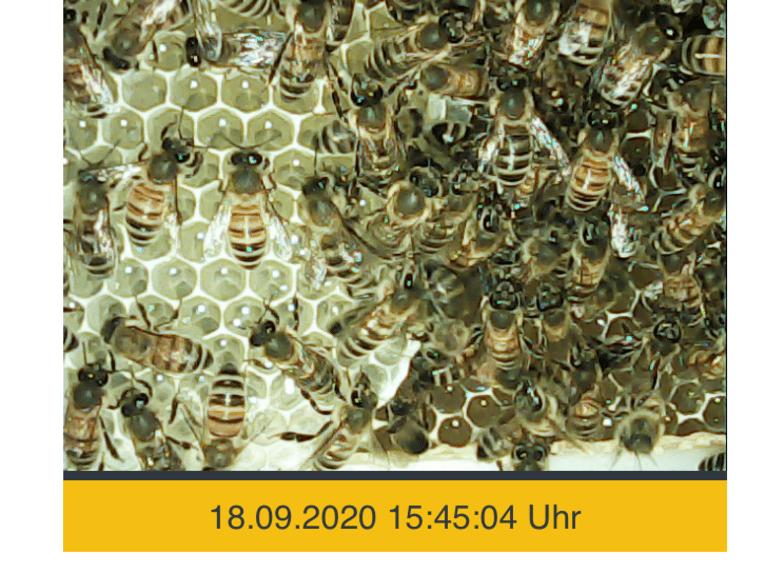 Ausschnitt, den eine Kamera erstellt hat. Dieser zeigt unzählige Bienen.