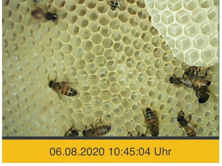 Aufnahme einer Kamera, die Bienen in einem Stock zeigt.