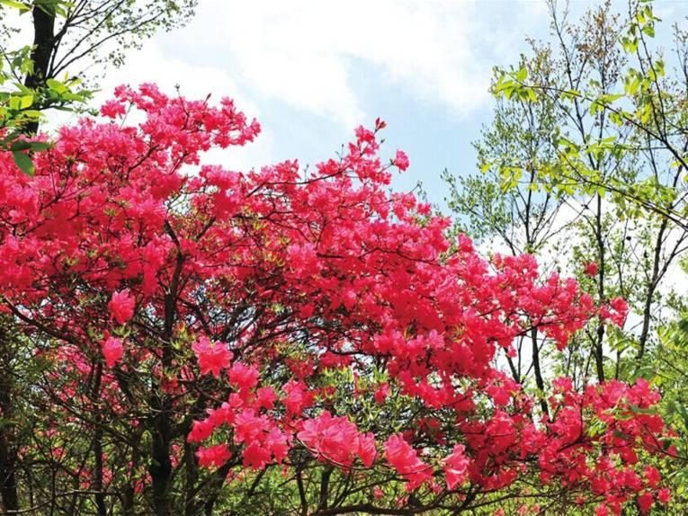 Pflanze mit roten Blüten.