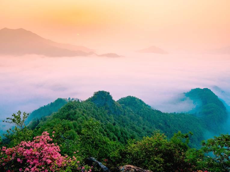 Grün bewachsene Hügel, davor Blütenpflanzen und dahinter Nebel und orangerotes Licht.