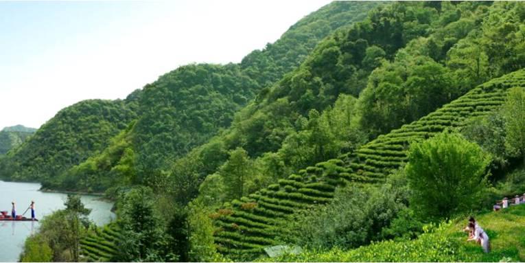 Tee wächst an grünen Hängen, Frauen arbeiten auf den Feldern.