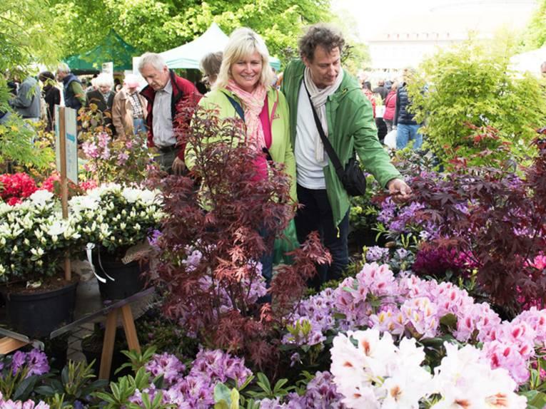 Eine Besucherin und ein Besucher der Pflanzentage an einem Verkaufsstand mit Azaleen, Rhododendren und Ahornbäumchen