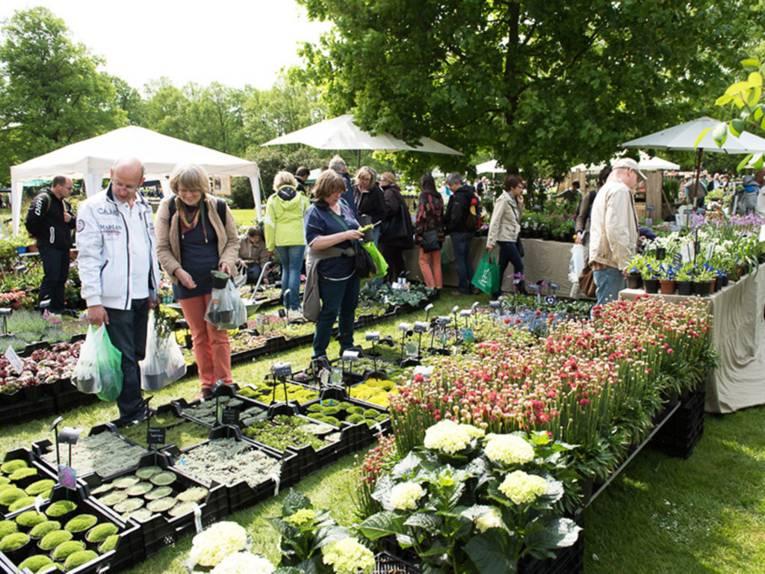 Besucherinnen und Besucher - zum Teil mit bereits gefüllten Einkaufstaschen - betrachten die vielfältigen Pflanzen an mehreren Ausstellungsreihen