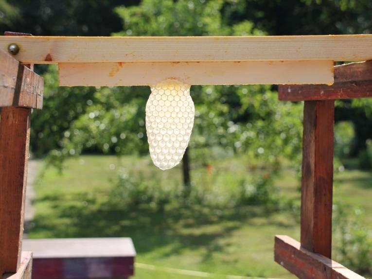 Eine verlassene Bienenwabe.