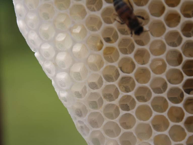 Biene auf einer Wabe.