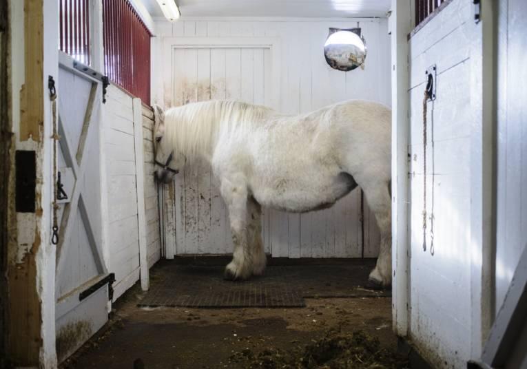 Schimmel im Pferdestall