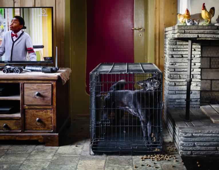 Hund in einem Käfig in einem Raum.