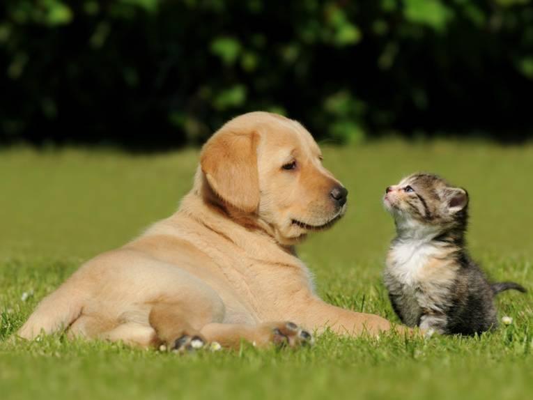 Haustiere und Tiere