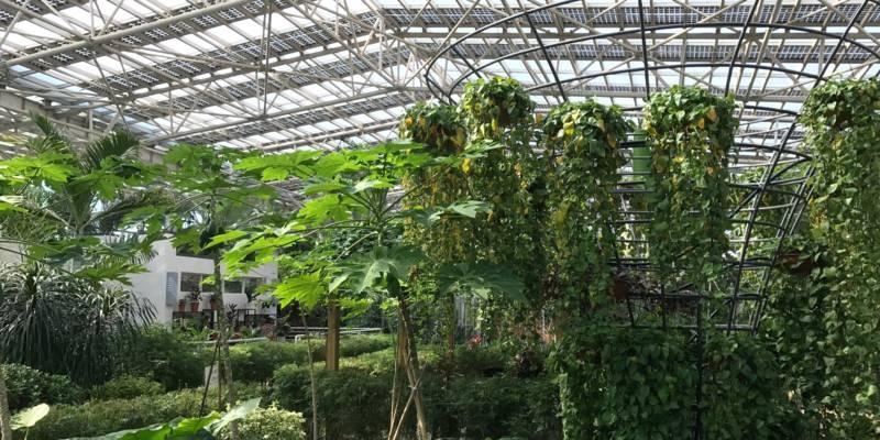 Blick in ein Gewächshaus mit grünen Pflanzen, auf dem Dach sind viele Solarzellen.