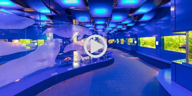 360° Tour durch das Landesmuseum