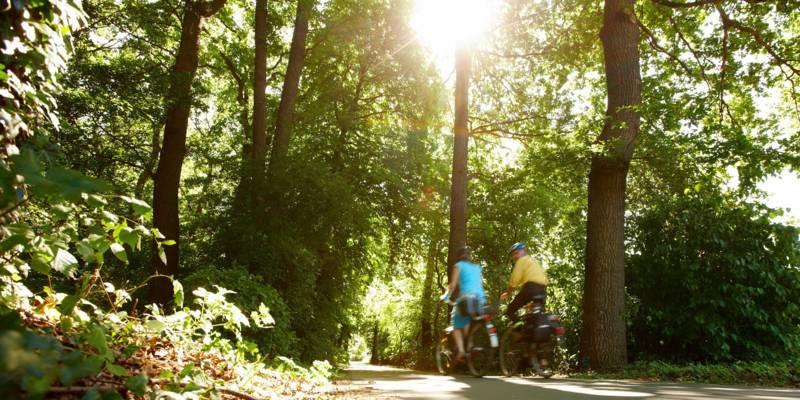 Zwei Radfahrer im Wald.